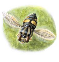 thumbnail hoverfly