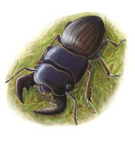 thumbnail stag beetle