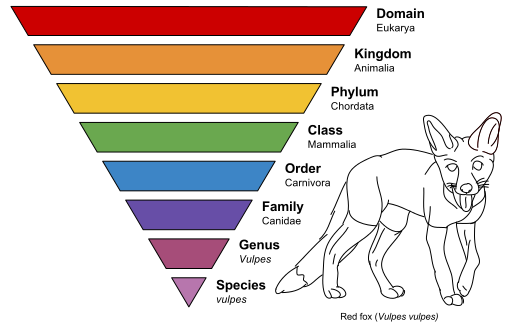 taxonomic_rank_graph-svg