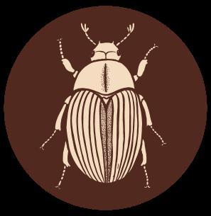 manuka-beetle-icon