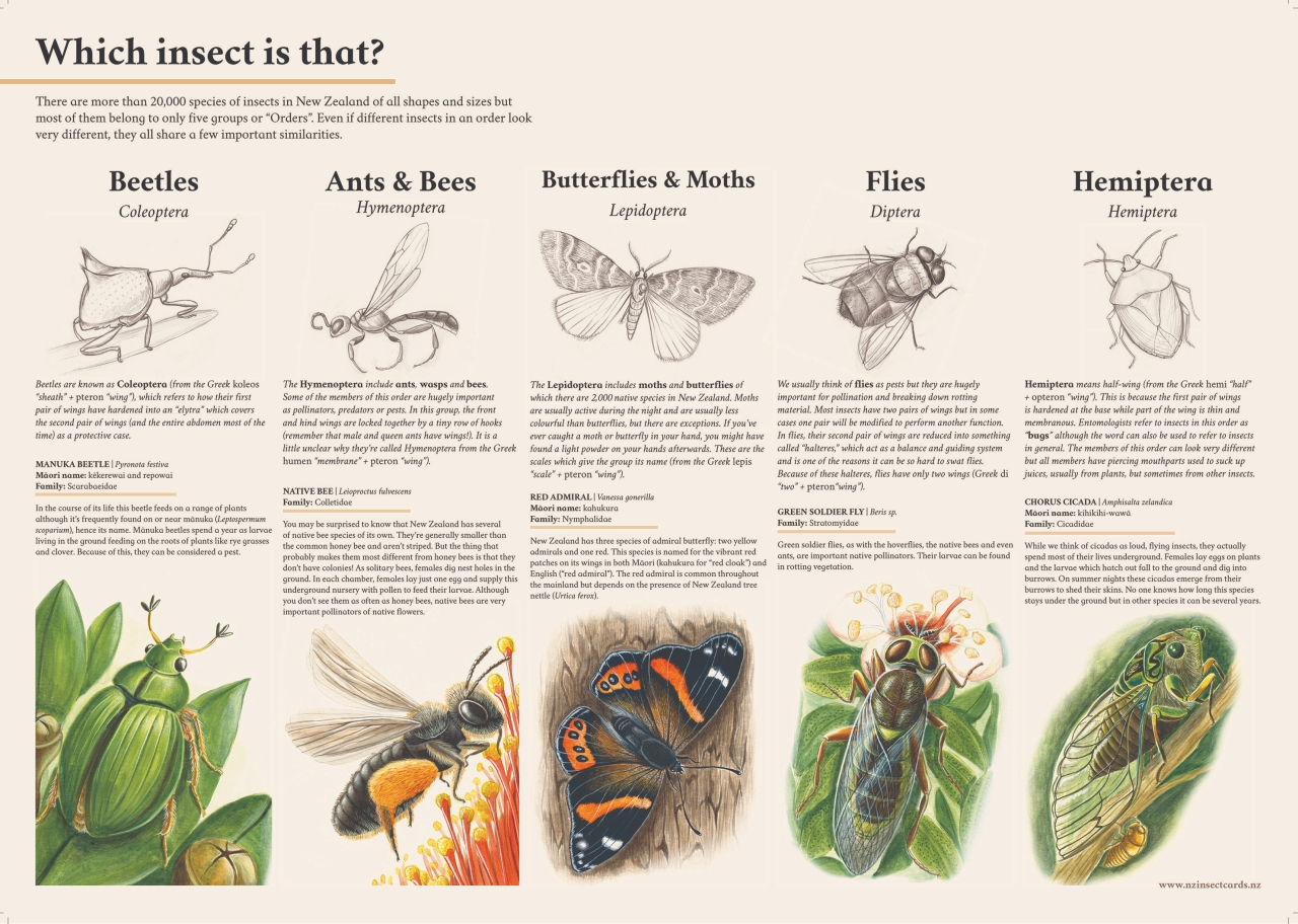which-insect-is-that-poster-final-12-07-18-3000px.jpg